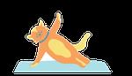 chat en pose de yoga